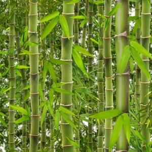 Ugepa Virtual Reality J415-04 Bambu Ormanı 3 Boyutlu Duvar Kağıdı